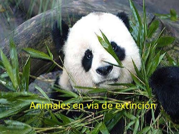 Animales En VíA De ExtincióN