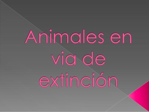 Esta especie se encuentra en peligro critico de extinción, porlo tanto, no hay una población grande de loros, lo quequiere...