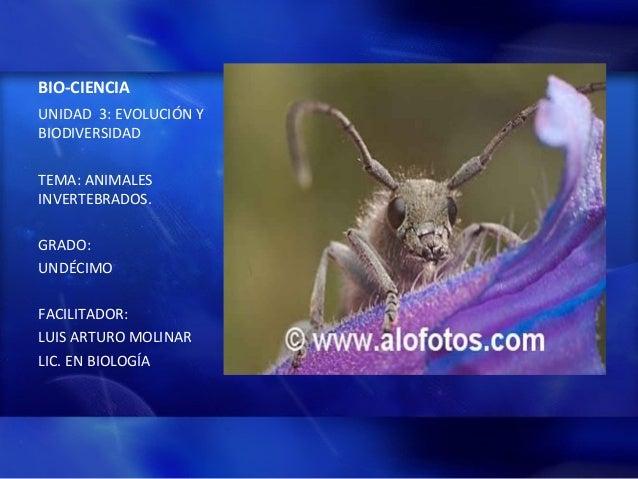 BIO-CIENCIA UNIDAD 3: EVOLUCIÓN Y BIODIVERSIDAD TEMA: ANIMALES INVERTEBRADOS. GRADO: UNDÉCIMO FACILITADOR: LUIS ARTURO MOL...