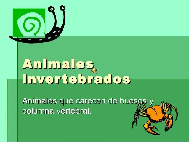 AnimalesAnimalesinvertebradosinvertebradosAnimales que carecen de huesos yAnimales que carecen de huesos ycolumna vertebra...