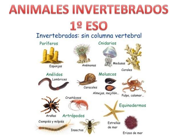 Animales invertebrados 1º eso