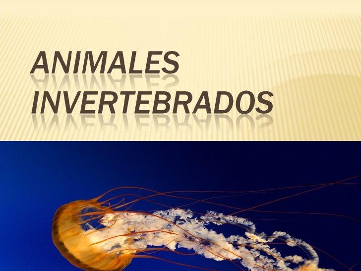 Animales invertebrados ppt