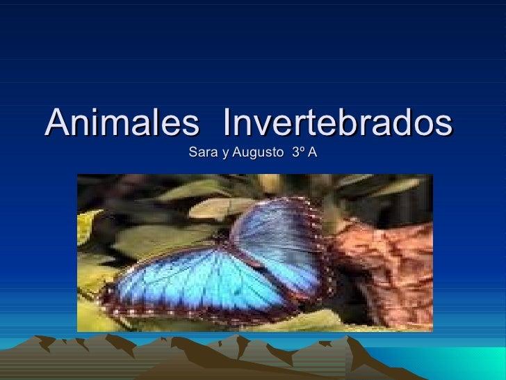 Animales  Invertebrados   Sara y Augusto  3º A