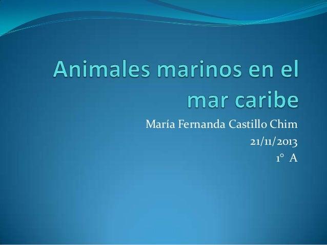 Animales marinos en el mar caribe