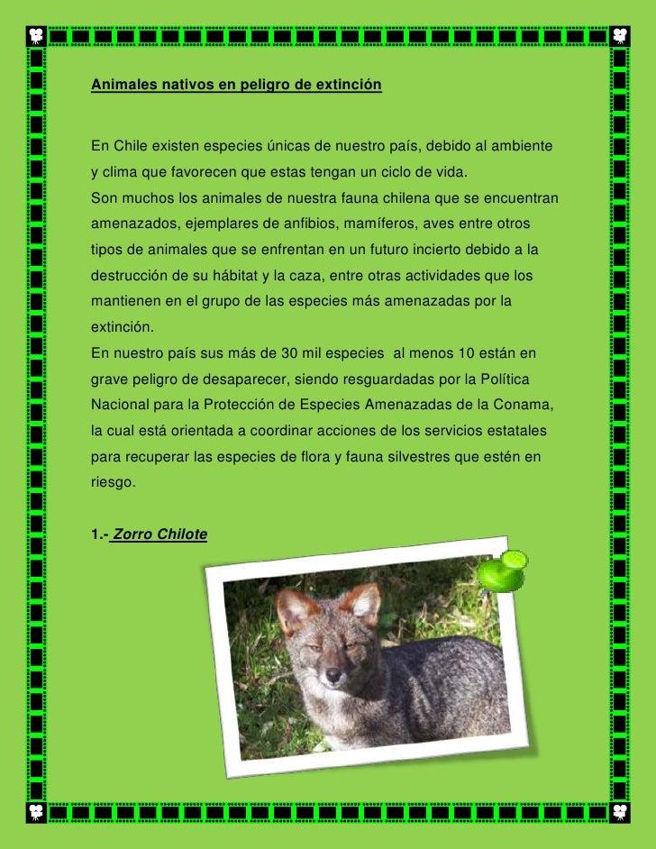 Animales nativos en peligro de extinciónEn Chile existen especies únicas de nuestro país, debido al ambientey clima que fa...