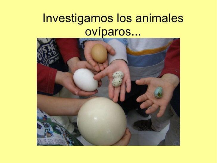 Investigamos los animales ovíparos...