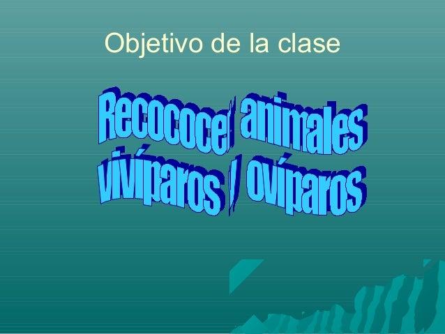 Animales ovíparos y vivíparos