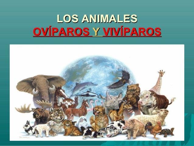 LOS ANIMALESLOS ANIMALESOVÍPAROSOVÍPAROS YY VIVÍPAROSVIVÍPAROS