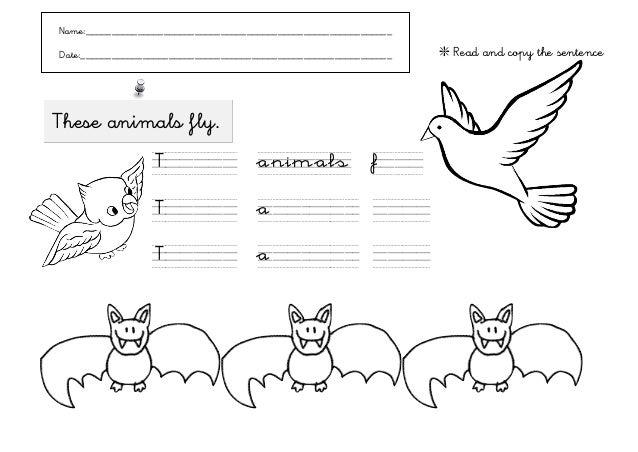 Animales que vuelan 2