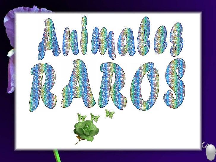 RAROS Animales