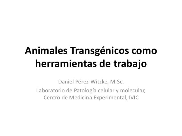 Animales Transgénicos como herramientas de trabajo Daniel Pérez-Witzke, M.Sc. Laboratorio de Patología celular y molecular...