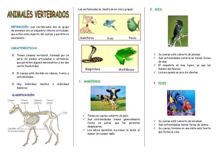 Los vertebrados se clasifican en cinco grupos:   2. AVESDEFINICIÓN.-Los vertebrados son un grupode animales con un esquele...