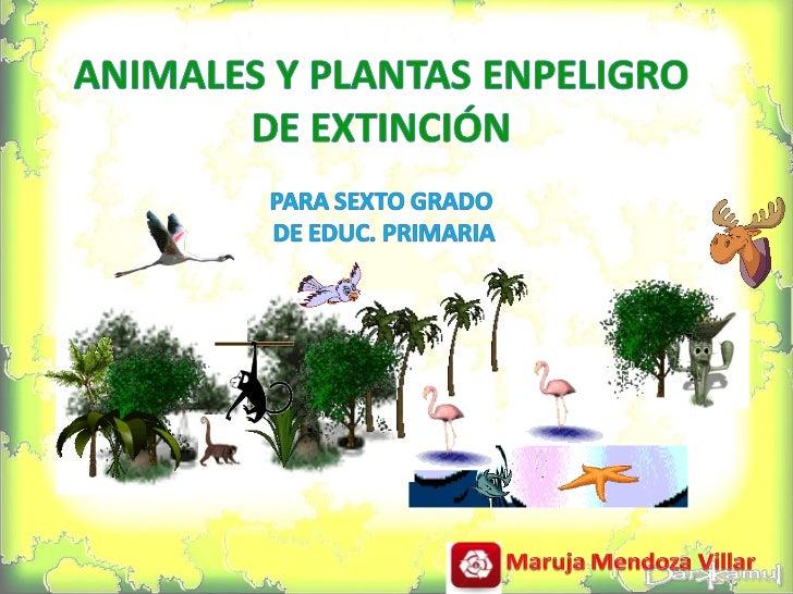 Animalesy Plantas En Peligro De ExtincióN