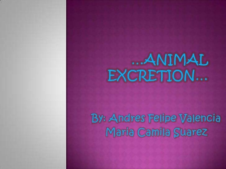 Animal excretion