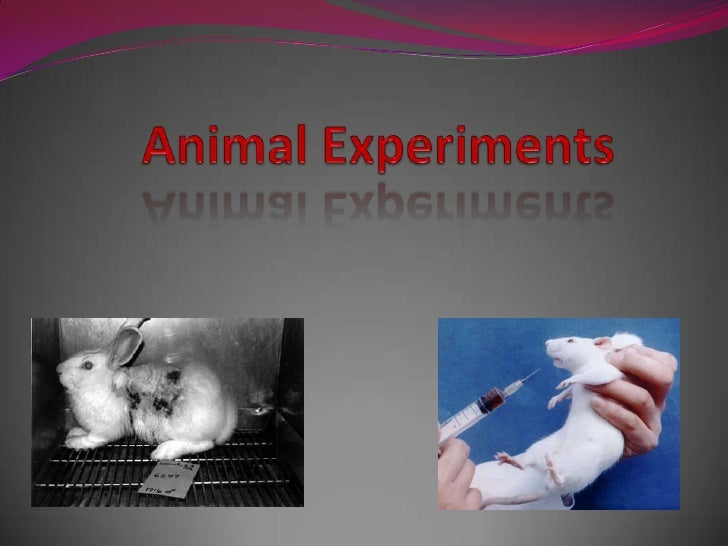 Animal Experiments<br />