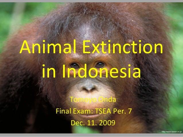 Animal extinction in indonesia final exam