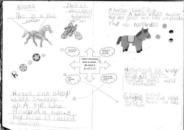 Class 2 Learning Log Animal Fact Files