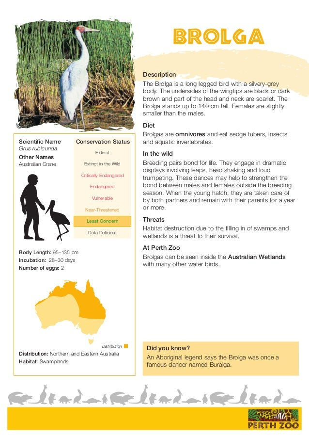 Related Keywords & Suggestions for hibernating animals fact sheet