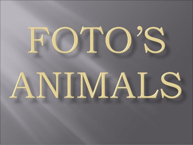 Animal fotoses - Animals