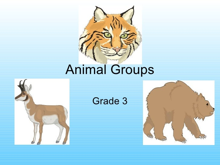 Animal groups by_food