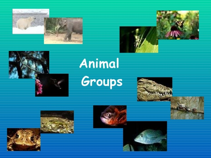 Animal Groups Jan2012