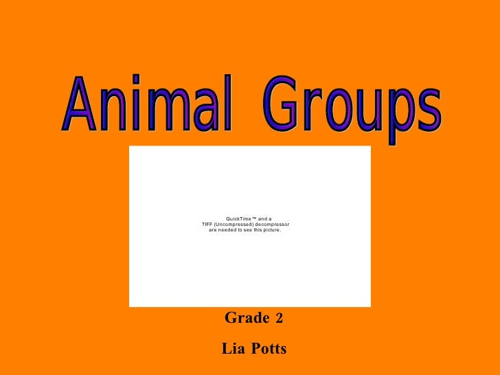 Animal Groups PPT