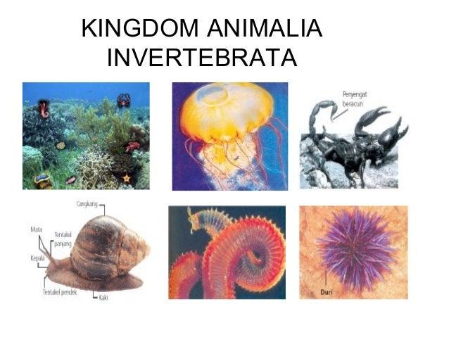 Animalia invertebrata kelas X