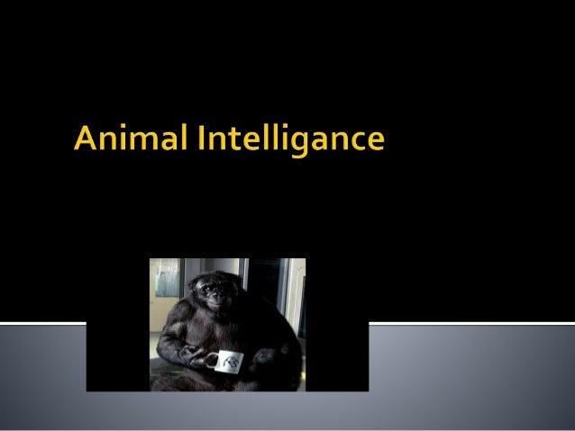 Animal intelligance powerpoint