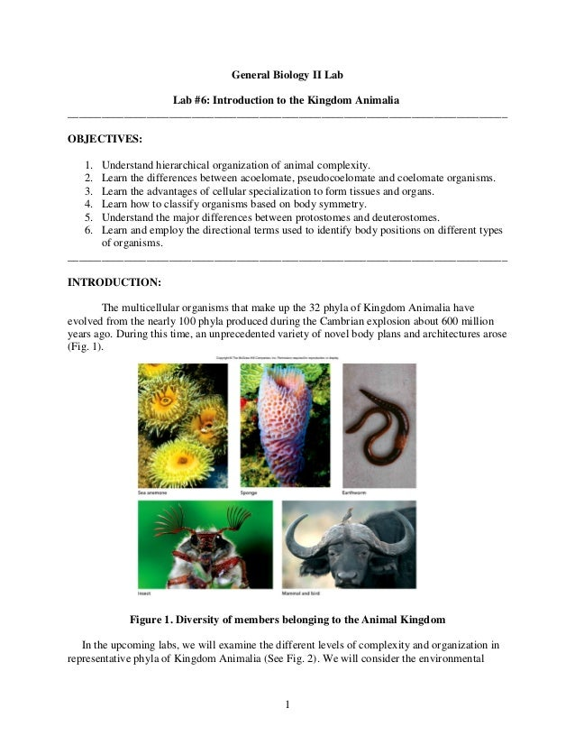1 General Biology II Lab Lab #6: Introduction to the Kingdom Animalia ____________________________________________________...