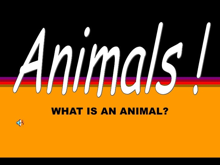 WHAT IS AN ANIMAL? Animals !