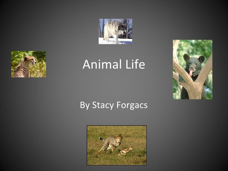 Animal Life By Stacy Forgacs