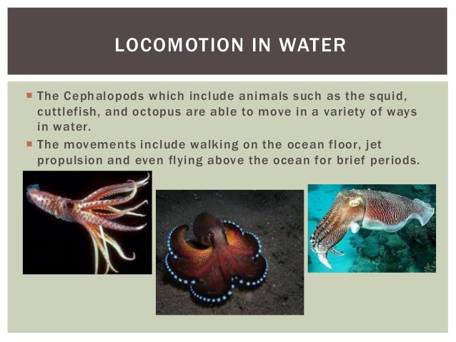 locomotion in an animal with an Scientists study some fishy behavior to solve an animal locomotion mystery jhu-led engineering team's discovery may enhance designs and control systems for small robots that fly, swim, or.