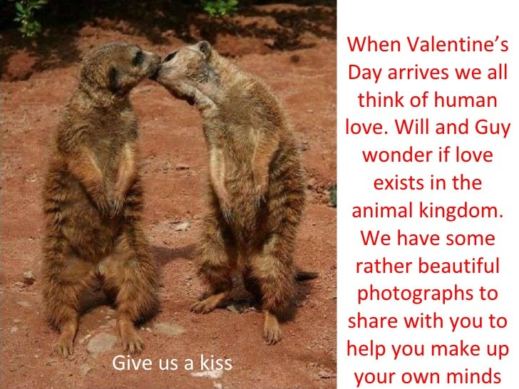When Valentine's Day arrives we all think of human love. Will and Guy wonder if love exists in the animal kingdom. We have...
