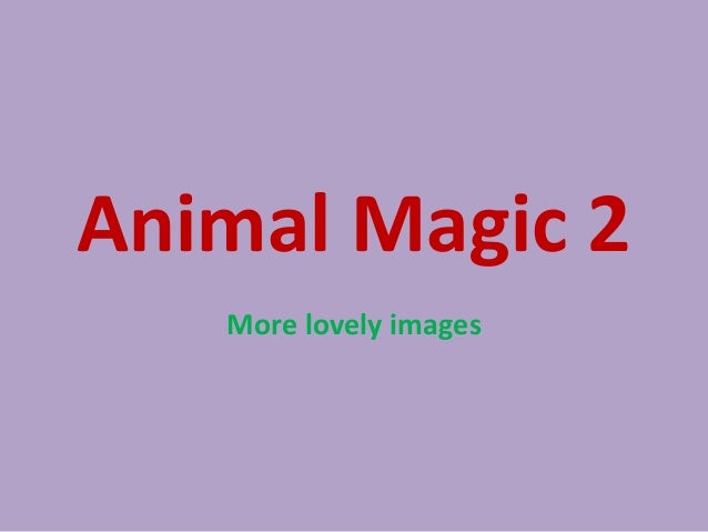 Animal Magic 2   More lovely images