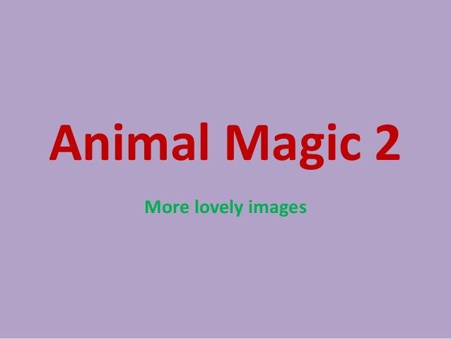 Animal magic 2