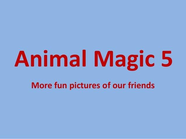 Animal Magic 5