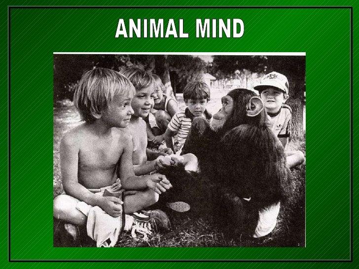 111-Animal Mind