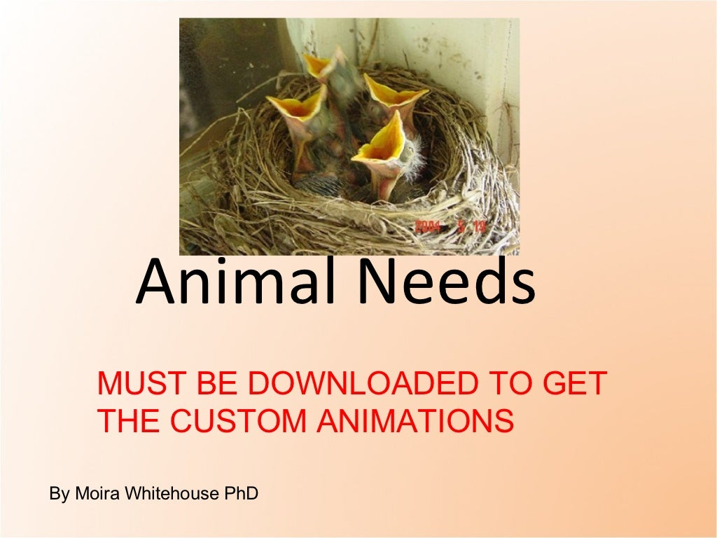 Animal needs. (teach)  pptx