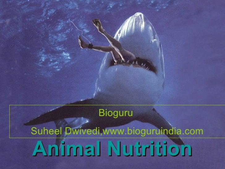 Animal Nutrition  (www.bioguruindia.com)