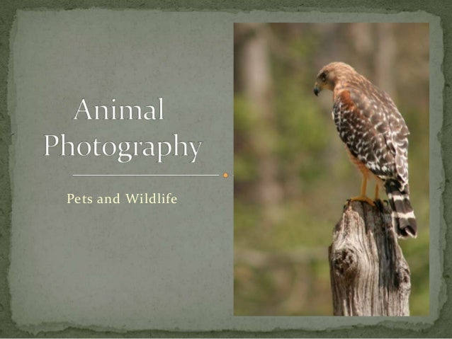 Pets and Wildlife