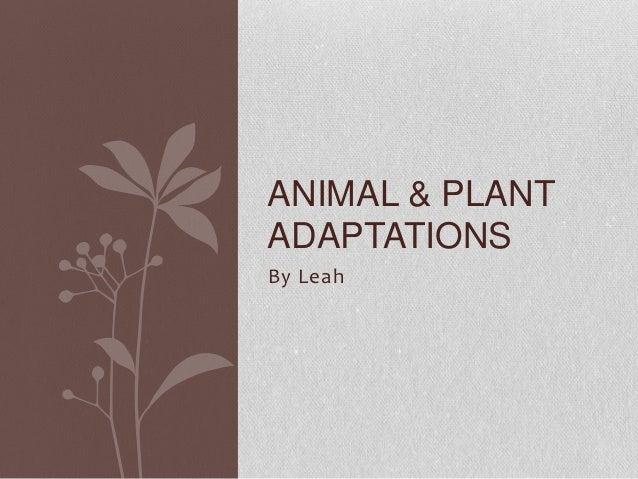 Animal & plant adaptations, Leah