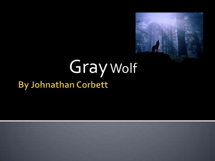 Animal power point (gray wolf)