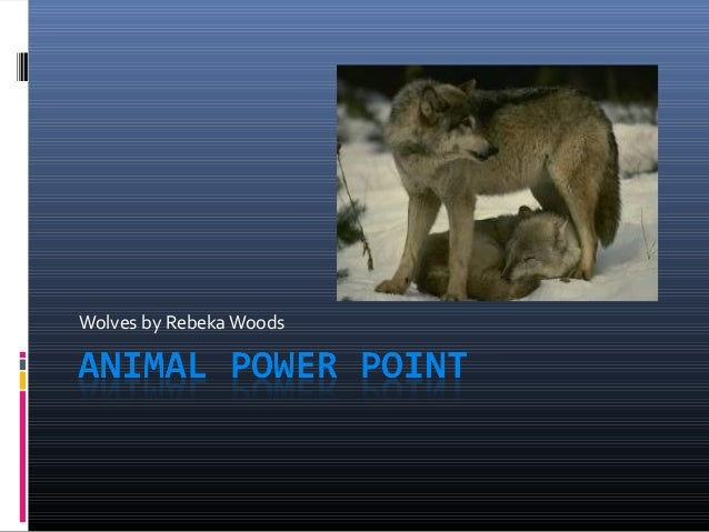 Animal power point rebeka w