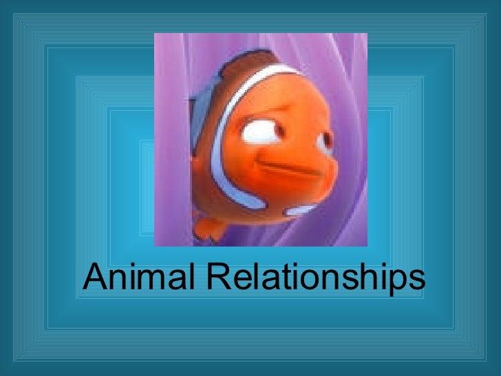 Animal Relationships