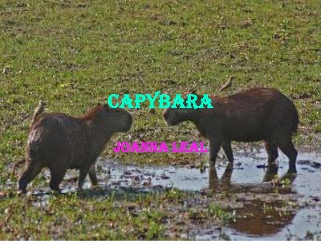 capybara Joanna Leal
