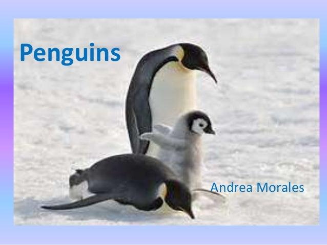 Penguins Andrea Morales