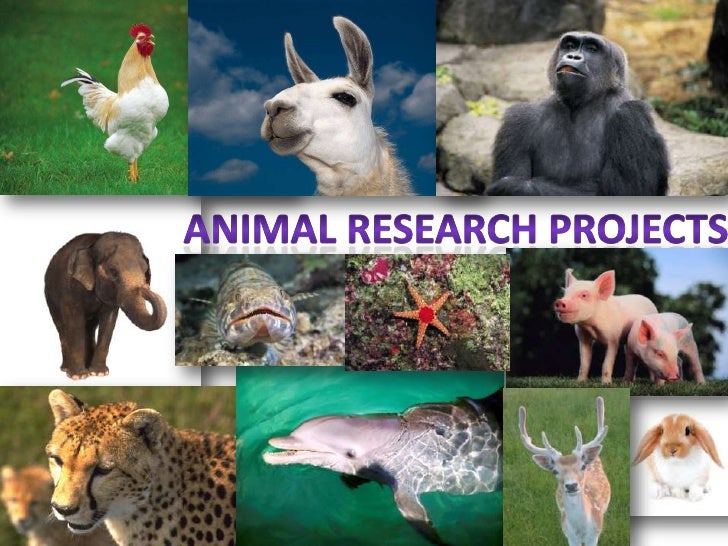 Buy research projects