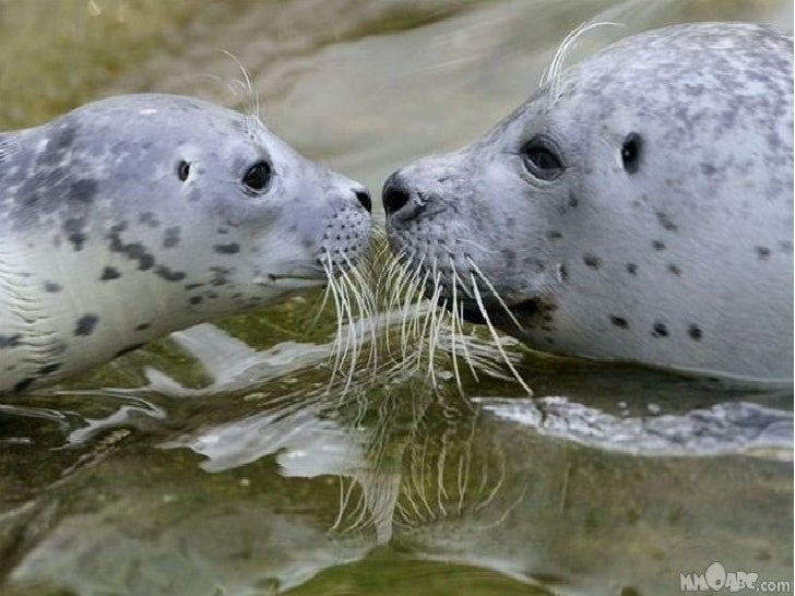 Beautiful Images of Animals in Love