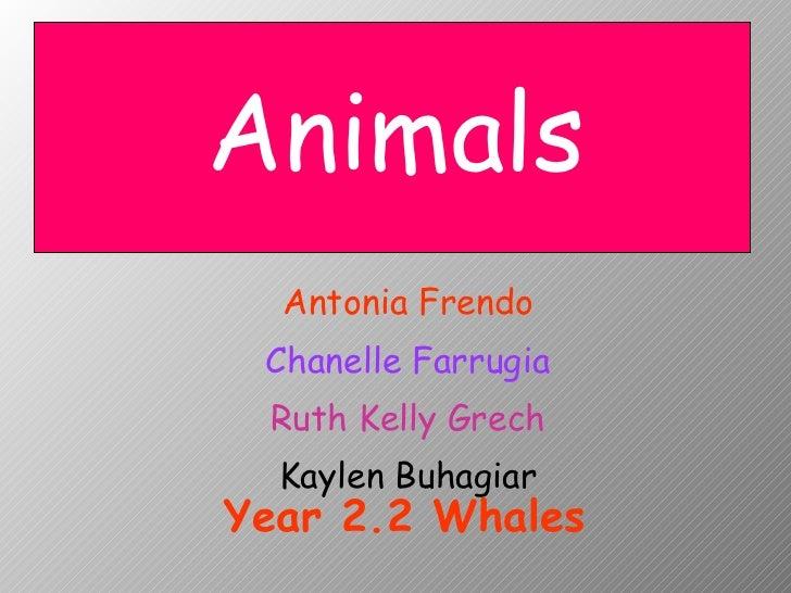 Antonia Frendo Chanelle Farrugia Ruth Kelly Grech Kaylen Buhagiar Animals Year 2.2 Whales
