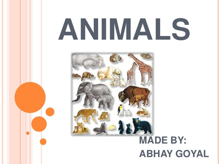 ANIMALS    MADE BY:    ABHAY GOYAL
